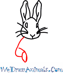 draw peter rabbit