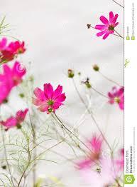 Nice Flowers Nice Flowers Royalty Free Stock Photography Image 21439337