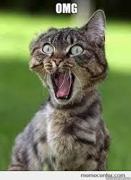 Omg Cat Meme - omg hockeyz excited cat hi quickmeme