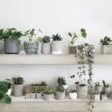 green plants and grey and concret planters plantes vertes et