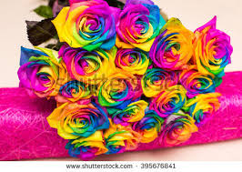 colorful roses beautiful bouquet colorful roses design decoration stock photo