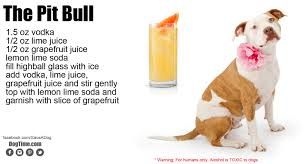 australian shepherd dogtime 10 dog inspired cocktails for your holiday party dogtime
