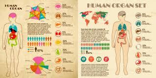 Human Anatomy Images Free Download Human Anatomy Svg Free Vector Download 86 244 Free Vector For