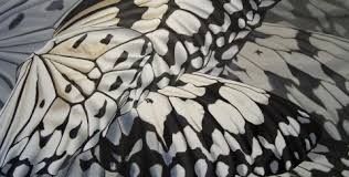 abstract pattern butterfly contemporary art rice paper butterfly wings abstract oil painting