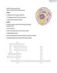 cellular respiration worksheets for middle lovetoknow