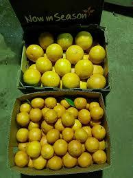 fruit delivered to home teresa s fresh fruit veggie s home delivered home