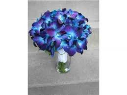 blue orchid flower blue orchid and bouquet beautiful orchid flower image ideas