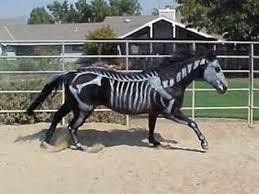Halloween Costumes Horse 41 Oko Konia Horse Costume Class Images Horse