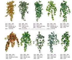 grape vine plant grape vine plant suppliers and manufacturers at