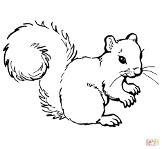 grey squirrel coloring page free printable coloring pages