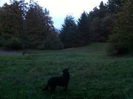 Whens Thanksgiving 2013 Dog Standing In Fields The Van Duzer Corridor
