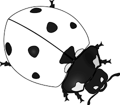 insect clipart black and white clip art library