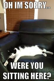 Sassy Cat Meme - 27 best sassy cats images on pinterest adorable animals cute
