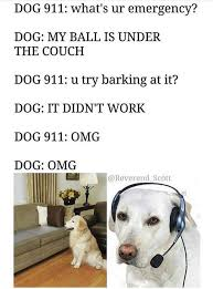 Lost Dog Meme - living with goldens