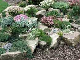 Rocks In Gardens Planting A Rock Garden Plants For Rock Gardens Hgtv