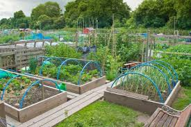 Urban Veggie Garden - planning an urban vegetable garden video and photos