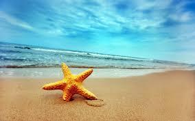 starfish in water wallpaper