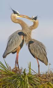 133 best herons images on pinterest blue heron herons and inuit art