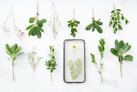 Zum Kaufen Trockenblumen Als Blickfang U2013 Zum Kaufen Oder Selbermachen Etsys