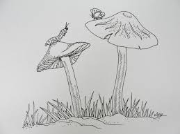 drawings of nature drawing nature photos drawing pencil
