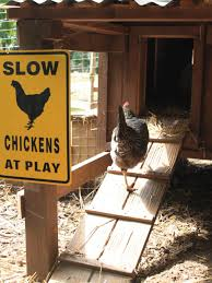 Small Backyard Chicken Coops by Urban Backyard Chicken Coops Hgtv