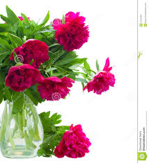 Peony Flowers by Peony Flowers Stock Photography Image 31210492