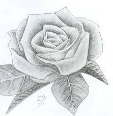 28 best just rose drawings images on pinterest rose drawings