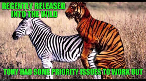 Funny Tiger Memes - if she s ripe with stripes he s in like flynn imgflip