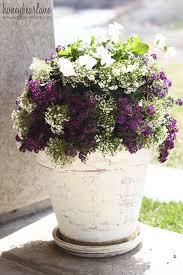 best 25 outdoor flower pots ideas on pinterest planting flowers