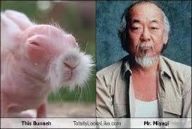 Mr Miyagi Meme - this bunneh totally looks like mr miyagi miyagi
