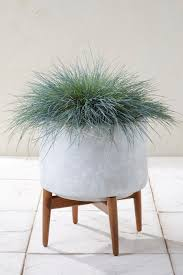 Modern Furniture Uk Online by Buy Wide Concrete Planter With Wooden Legs From The Next Uk Online