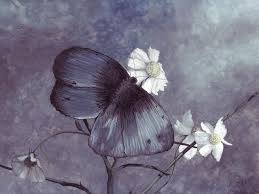 butterfly grey flower drawing animal butterfly wallpaper pictures