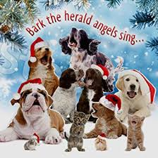 singing barking dogs animal charity cards pack of 10