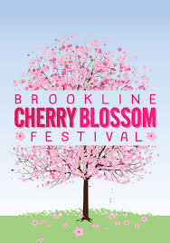 the japan society of boston the annual brookline cherry blossom