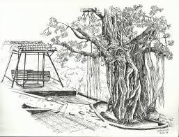 banyan tree clipart pencil sketch pencil and in color banyan