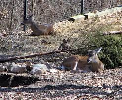 Kentucky wildlife images Kentucky wildlife genuine kentucky png