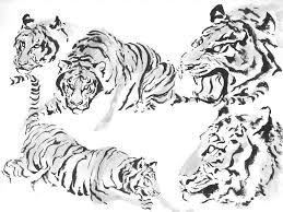 tiger ink sketches by ryuuji on deviantart