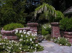 kletterpflanzen fã r balkon rosa madnevilla kletterpflanzen blüten sommer saison schöne garten