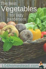 the best vegetables for lazy gardeners