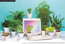 Small Desk Plants Best Desk Plants 12 For The Office Bloomberg