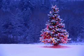 christmas tree snow cheminee website light christmas tree snow lights hd wallpaper beautiful beautiful christmas tree snow wallpaper falling on the