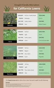 best 25 grass alternative ideas on pinterest lawn alternative