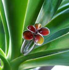 U Form K He Kaufen Idee Und Form Frühlingserwachen Und Seltene Unterwasser Pflanzen