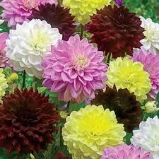 Garden Express Summer Catalogue - shop summer flowering bulbs at breck u0027s