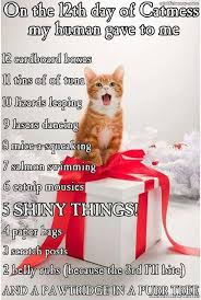 Merry Christmas Cat Meme - 12 days of catmas normally i hate that song but this version i like