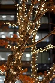 Outdoor Twinkle Lights by 185 Best Tiny Lights Images On Pinterest Blush Pink Bokeh And
