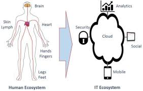 Human Anatomy And Body Systems How The Human Anatomy Is Like An It Infrastructure Ecosystem Ibm
