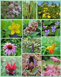 native north american plants 12 native plants for food and medicine