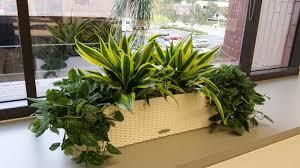 Interior Credit Union Interior Plants For Credit Union Plantopia Interior Plant Service
