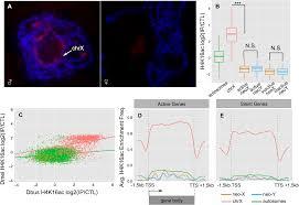 ancestral chromatin configuration constrains chromatin evolution